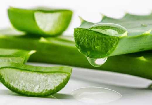 El Aloe Vera. Propiedades y beneficios para tu salud