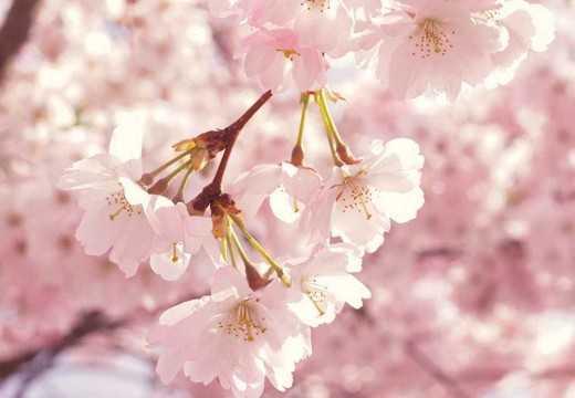 Astenia primaveral: qué es, cuáles son sus síntomas  y consejos para combatir con ella